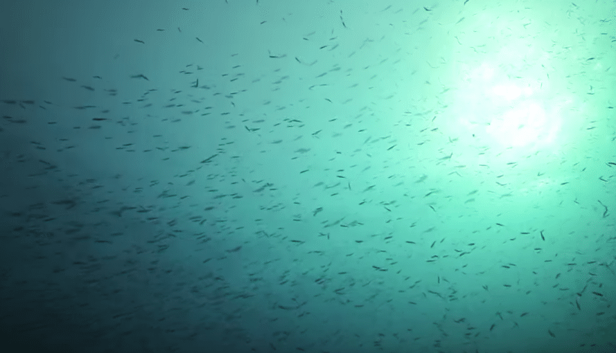 Farming The Ocean For A Better Future