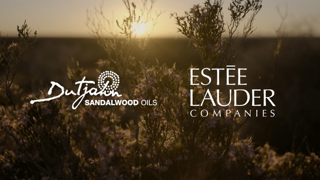 Dutjahn Sandalwood Oils & The Estée Lauder Companies: Creating a Beautiful Future Together